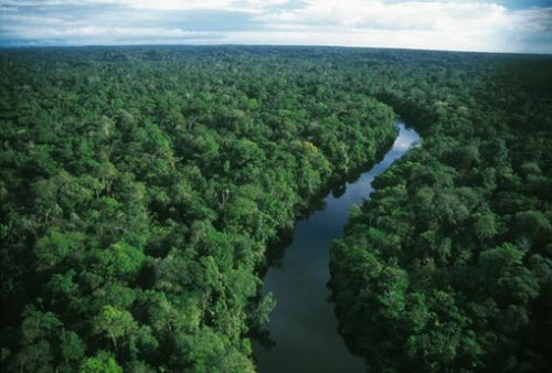 Amazon Rainforest 10 Interesting Amazon Rainforest Facts