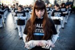 10 Interesting Animal Rights Facts