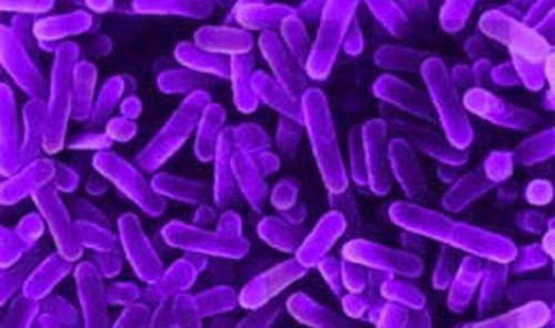 Bacteria in Purple