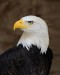 10 Interesting Eagle Facts