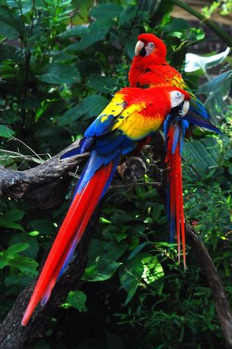 Bird in Amazon Rainforest