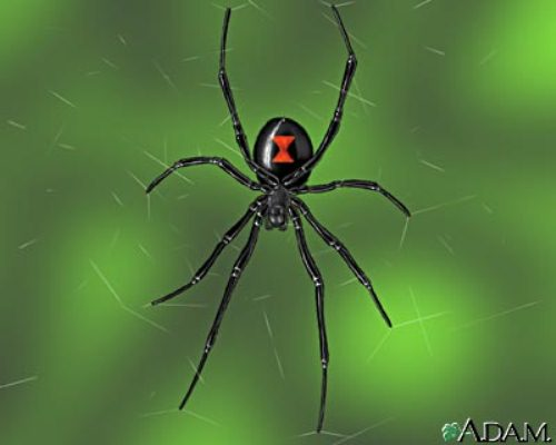 Black Widow Webs 10 Interesting Black Widow Facts