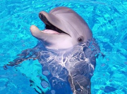 10 Interesting Dolphin Facts | My Interesting Facts