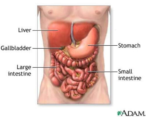 Digestive System 10 Interesting Digestive System Facts