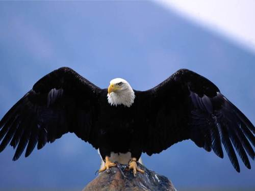 Eagle's Wing Span