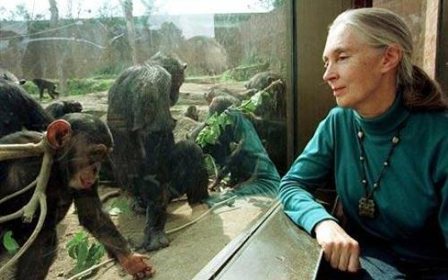 Jane Goodall Observes 10 Interesting Jane Goodall facts