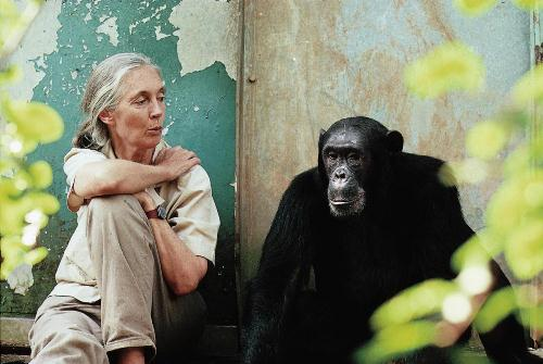 Jane Goodall Pic 10 Interesting Jane Goodall facts