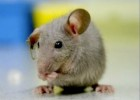 10 Interesting Mice Facts