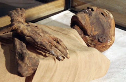 Mummy on Display 10 Interesting Mummy Facts