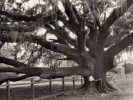 10 Interesting Oak Tree Facts
