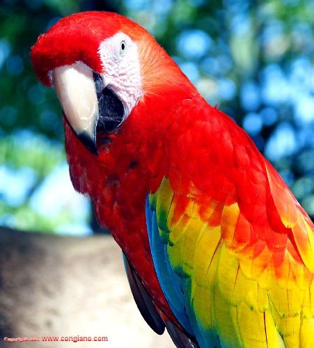 10 Interesting Parrot Facts | My Interesting Facts