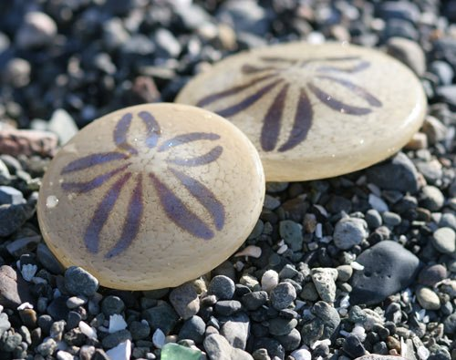Sand Dollars 10 Interesting Sand Dollar Facts