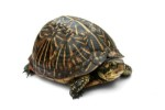 10 Interesting Turtle facts