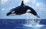 10 Interesting Whale Facts