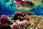 10 Interesting Coral Reef Facts