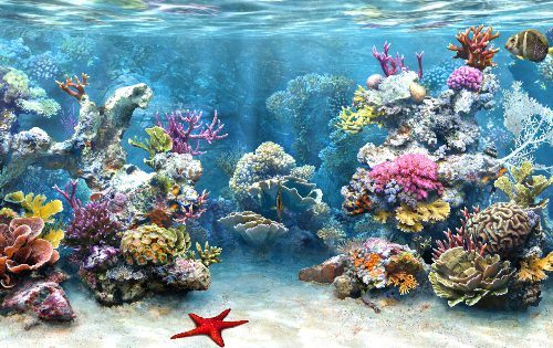 10 Interesting Coral Reef Facts | My Interesting Facts