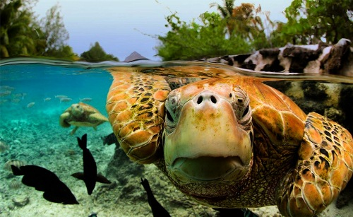 10 Interesting Sea Turtle Facts | My Interesting Facts
