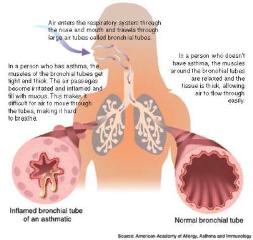 Lung 10 Interesting Respiratory System Facts