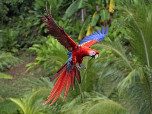 Macaw Flight