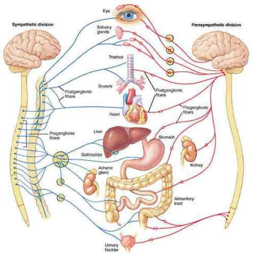 Nervous System fact 10 Interesting Nervous System Facts