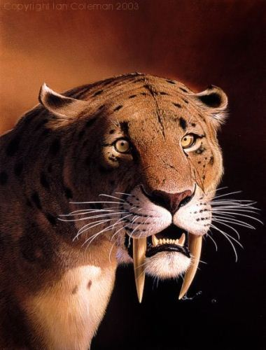 Saber Tooth Tiger Fact