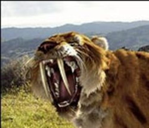 Saber Tooth Tiger Facts 10 Interesting Saber Tooth Tiger Facts