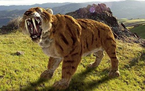 Saber Tooth Tiger 10 Interesting Saber Tooth Tiger Facts