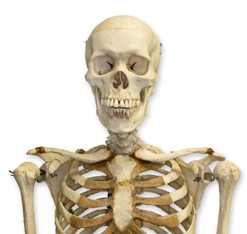 10 Interesting Skeletal System Facts | My Interesting Facts