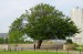 10 Interesting Trees Facts
