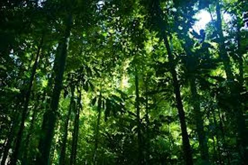 10 Interesting Rainforest Facts My Interesting Facts