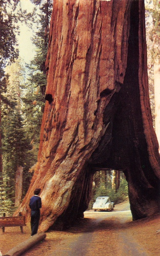Yosemite National Park Tree 10 Interesting Yosemite National Park Facts