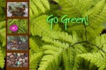 10 Interesting Going Green Facts