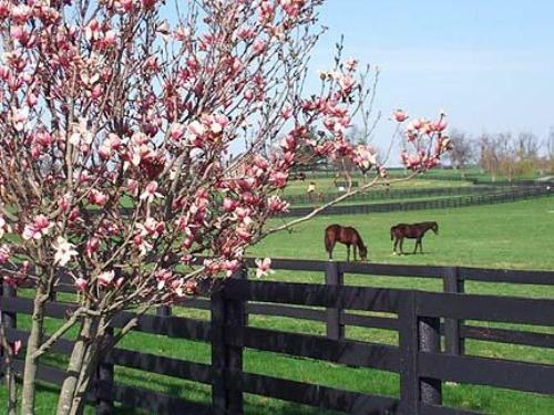 Kentucky Countryside