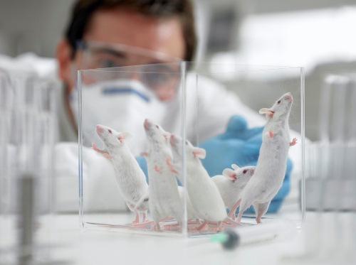 Animal Experimentation with Rats