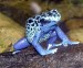 10 Interesting Poison Dart Frog Facts