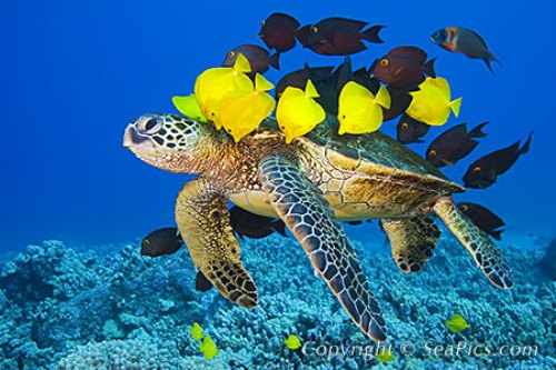 10 Interesting Green Sea Turtle Facts | My Interesting Facts