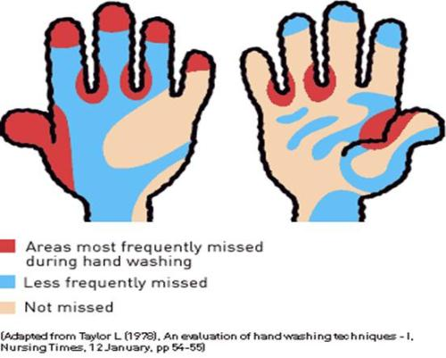 Hand Washing Area 10 Interesting Hand Washing Facts