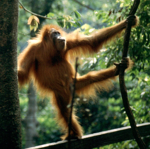 Monkey 10 Interesting Tropical Rainforest Facts