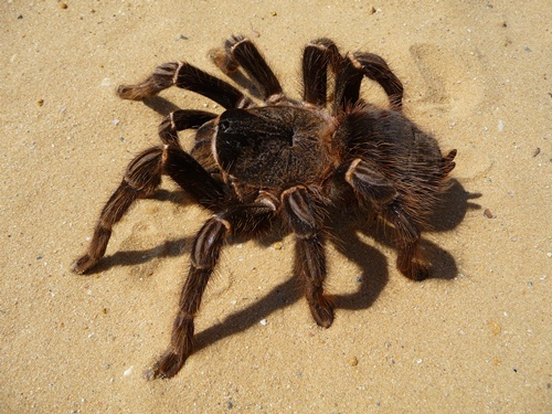 Spider Fact 10 Interesting Spider Facts