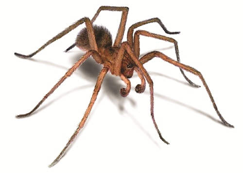Spider Facts 10 Interesting Spider Facts