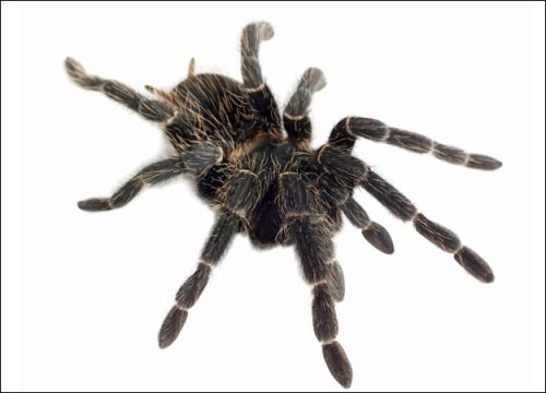 Spider 10 Interesting Spider Facts