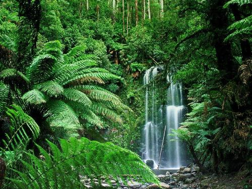 Tropical Rainforest 10 Interesting Tropical Rainforest Facts