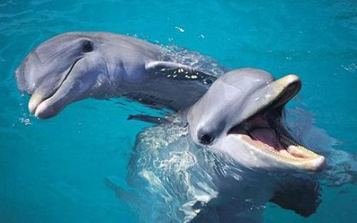 Bottlenose Dolphin Cute