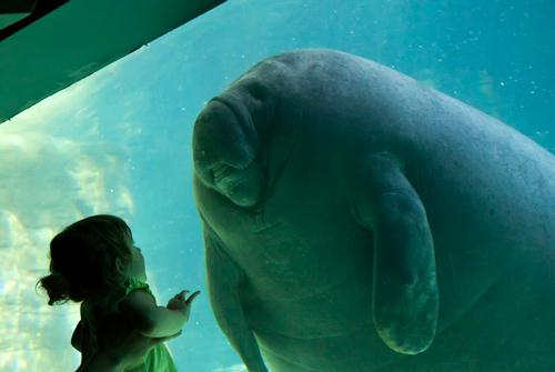 Manatee and Kid