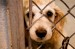 10 Interesting Animal Abuse Facts