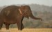 10 Interesting Asian Elephants Facts