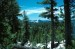10 Interesting Coniferous Forest Facts