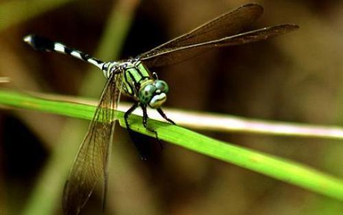 10 Interesting Dragonflies Facts My Interesting Facts