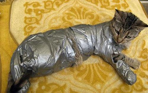 Duct tape cat