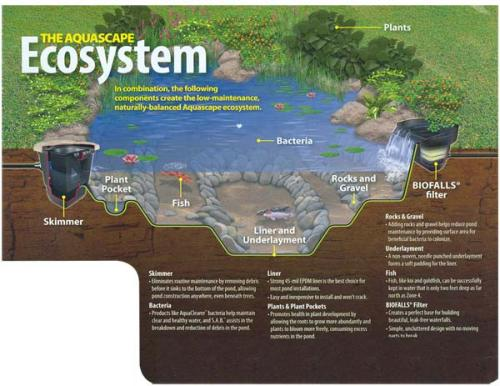 10 Interesting Ecosystem Facts | My Interesting Facts